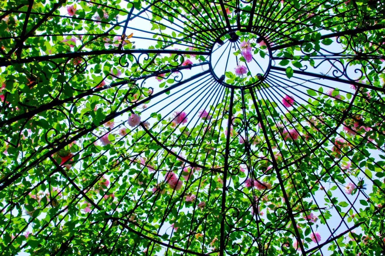 2019年姫路手柄山温室植物園